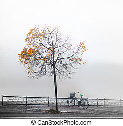 Bike under autumnn tree - Bike in bicycle rack under lone...