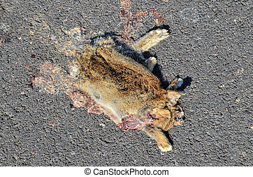 Dead Animal Mammal on the Asphalt Road