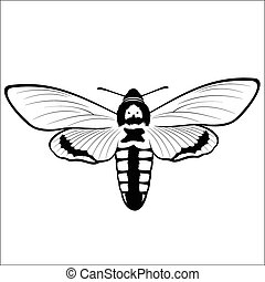Death s Head Hawkmoth - Vector illustration - Death s Head...