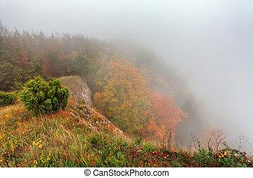 Autumn forest with mist, Fog