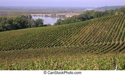 Vineyard hills on the banks of the - vineyards of the Cotes...