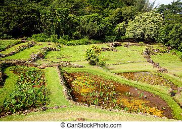 Terraced agriculture on Kauai - Example of terraced gardens...