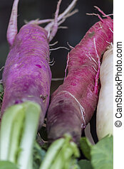 red turnips