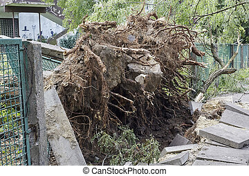 Fallen tree in park - Fallen tree caused by high winds in...