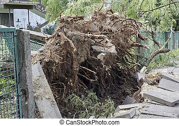 Fallen tree in park - Fallen tree caused by high winds in...