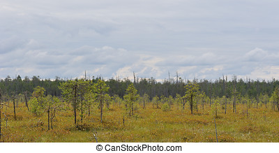 Moorland - Landscape Moorland in the North of Russia