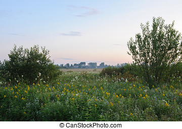 Field flowers. - Landscape. Field with field flowers.