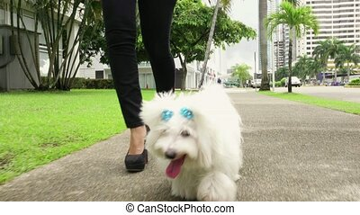 2 Businesswoman Commuting To Office With Her Dog - Young...