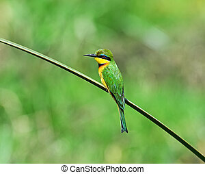 Bee-eater on a branch in the park Masai Mara
