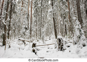 windfall - wind-fallen trees deep in taiga covered by the...