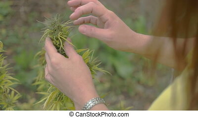 Homegrown Marijuana Plant - Young caucasian woman looking at...