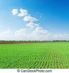 white clouds in blue sky over green spring field