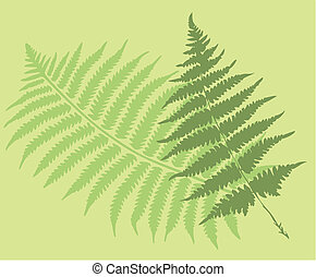 fern leaves, vector silhouettes