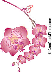 vector orchid - Orchid flowers with butterfly, vector