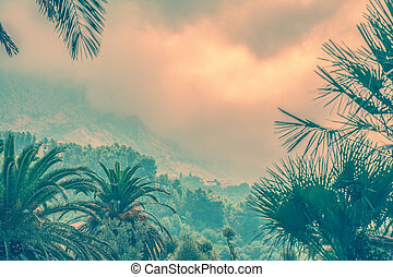 Palms and moutains in the morning fog Pink vintage photo...