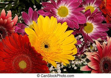 herbera bouquet