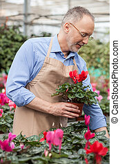 Professional shop assistant is working at greenhouse -...
