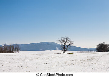 Snow covered field and trees under blue sky