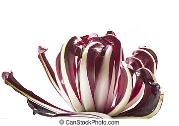 radicchio chicory - red italian radicchio chicory from...