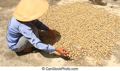 woman drying peanut