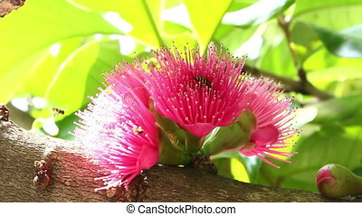 Bees are swarming pink flowers in the morning
