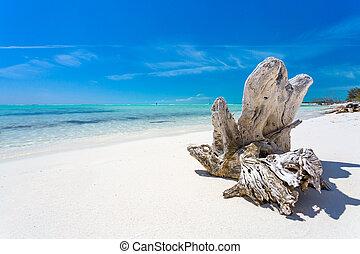 Snag on the tropical beach - Tropical sandy beach of Cayo...