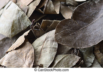 leaves of coca - dried coca leaves for preparation of the...