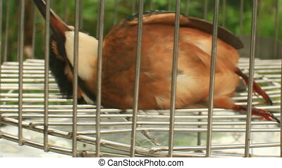 blue bird on cage