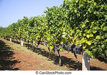 View at wineyard
