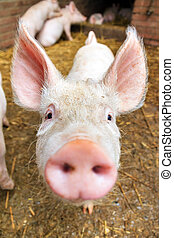 Front snout - Funny wide angle close up portrait of a cute...