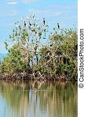 Migratory Birds - Migratory birds resting near the Sonny...