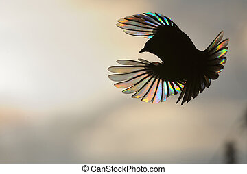 Firebird In Black and Colors - Firebird The passerine with...