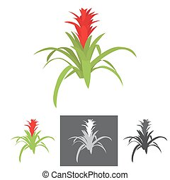 agave plant with flower vector illustration with bonus grey...