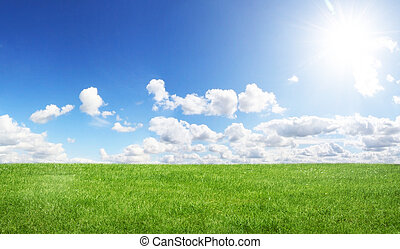 Green field and blue sky - Beautiful green grass with blue...