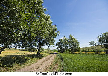 Ground road in a rural landscape: trees near cereal field