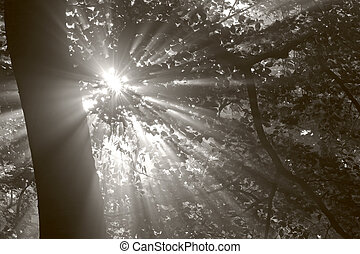 sunbeams through the forest foliage