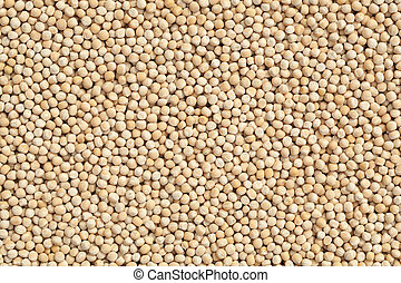 dry pea (Pisum sativum) as background