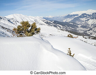 Panoramic view over a snowy slope with young pine tree -...