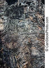 Burnt log with charcoal surface - Charcoal surface on burnt...