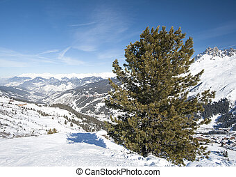 Panoramic view over a snowy slope with pine tree - Panoramic...