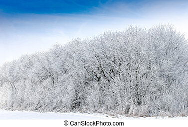 winter landscape - white winter landscape,trees and shrubs...