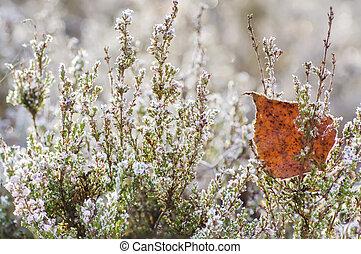 Frozen heather flower, floral vintage winter background,...