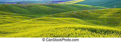 Rapeseed yellow fields in spring with blue sky and hills,...
