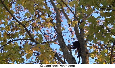 Black and orange cats high in a tree. - Black and orange...