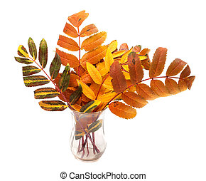 Multicolor autumn rowan leafs in glass. Isolated on white...