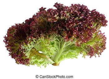 Lollo Rosso lettuce over white - A lollo rosso lettuce...