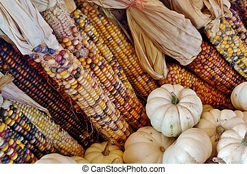 Dried corn and white pumpkins