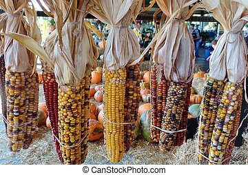 Dried indian corn stock photo images 1 281 dried indian corn royalty