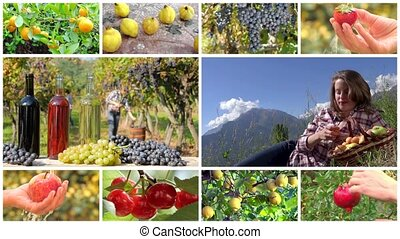 fruit harvest montage - collage including hands harvesting...