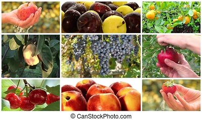 fruit harvest montage